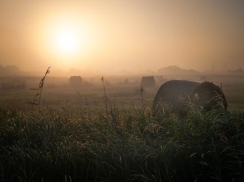 Morning after Harvest Time