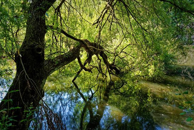 Un arbre penché