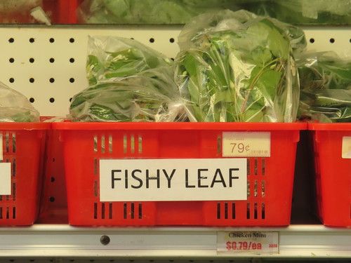 Fishy leaf/chicken mint