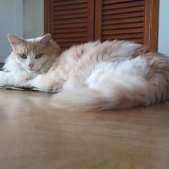 ☁️ #cats #CatsOfInstagram #catsitting