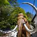 Mammoth, Dan-yr-Ogof