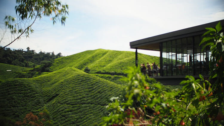 Cameron Highlands Malaysia for couples