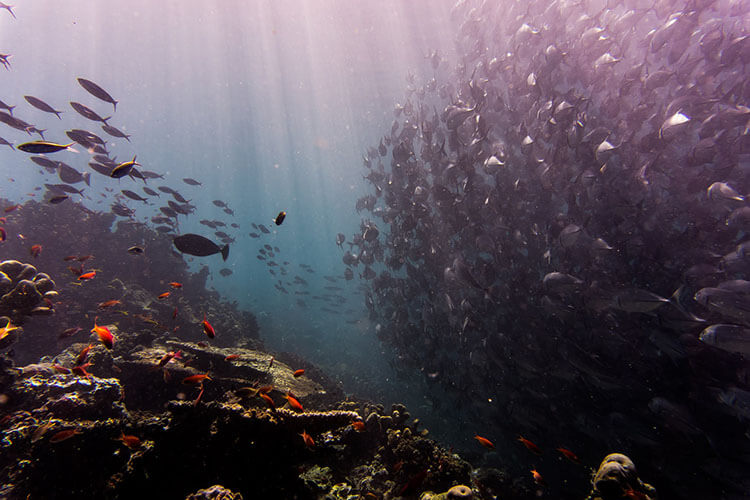 Scuba Dive in Sipadan Island, Sabah