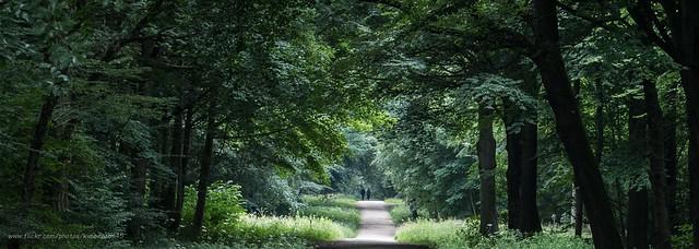 Whitwell Wood, Worksop