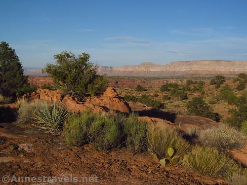 Desert plants (yucca, prickly pair, mesquite, Mormon tea) near the Tuweep Campground, Grand Canyon National Park, Arizona