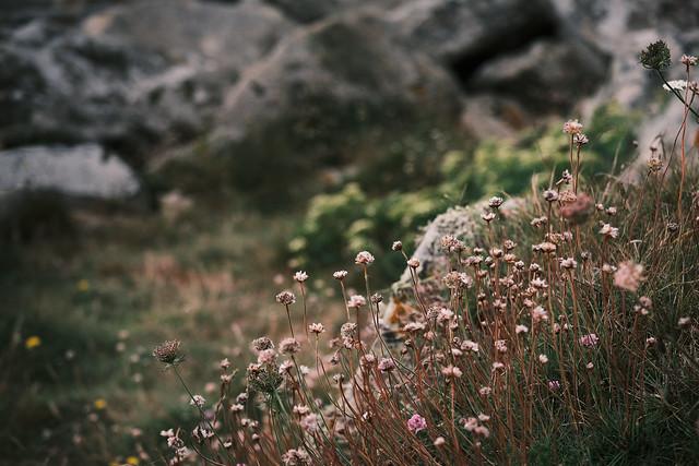 Fleurs et chaos