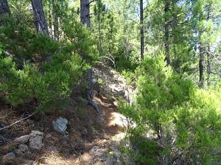 Chemin de Luviu : la traversée vers la droite après la montée raide de la section 15 et rentrée dans la forêt