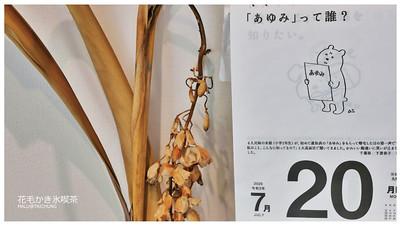 花毛冰喫茶-19