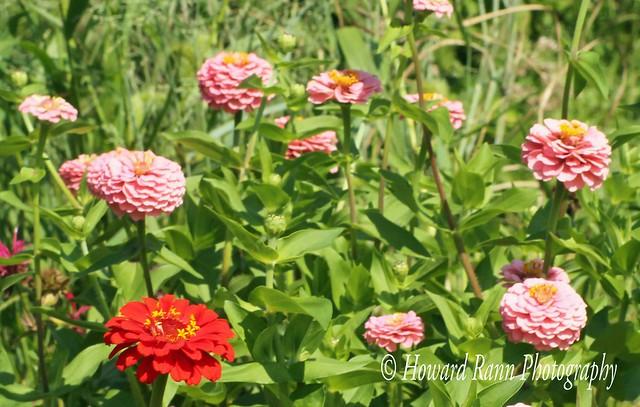 Bucks County Farm Gardens (107)