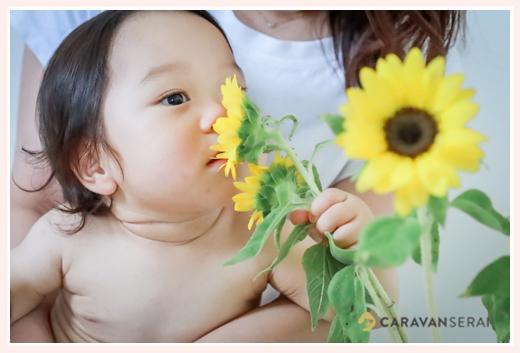 ひまわりの花を顔に寄せる赤ちゃん