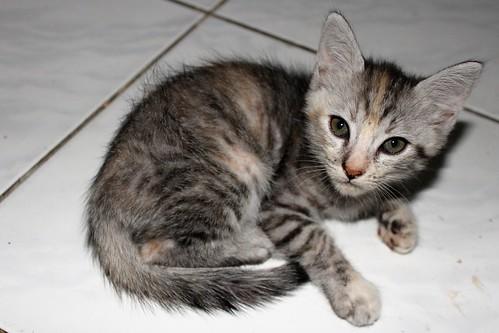 cebu visayas dumanjug world trip travel asia flickr tour philippines explore luzon kitten