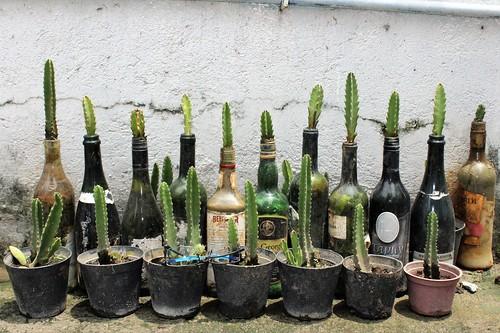 cebu dumanjug world trip travel asia flickr tour philippines explore visayas luzon cactus flower pots