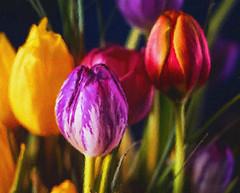 A Garden of Color