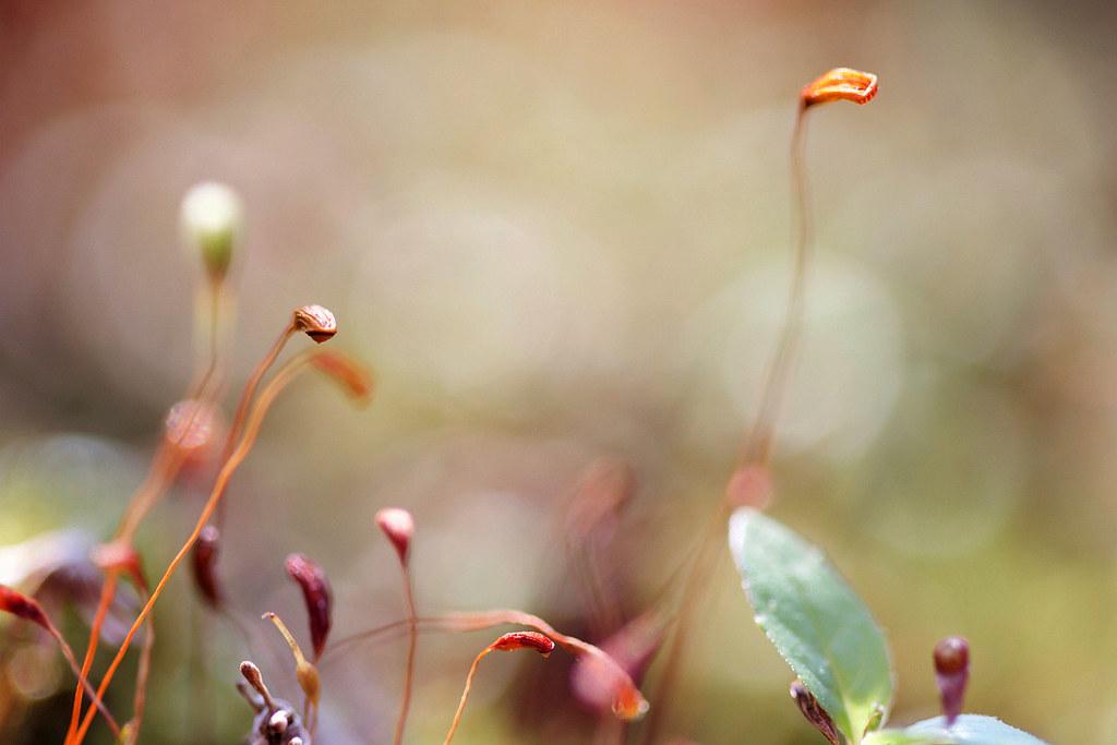 Mosses Little world