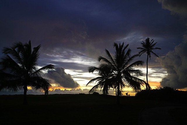 Palm trees & dramatic sky at dawn, St Kitts