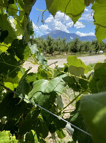 big bs delicious orchards vines grapes mt sopris mountain view