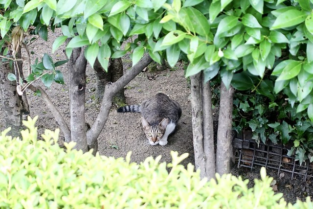 Today's Cat@2020ー08ー13