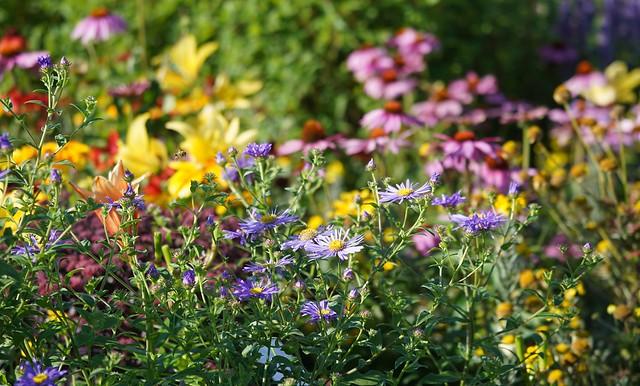 Bee seeks Flower...
