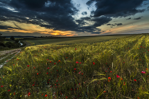 poppies poppyfield southdowns southdownsnationalpark sunset sussex england uk countryside canon 80d sigma 1020mm leefilters
