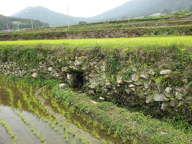 Republic of Korea- Traditional Gudeuljang Irrigated Rice Terraces in Cheongsando
