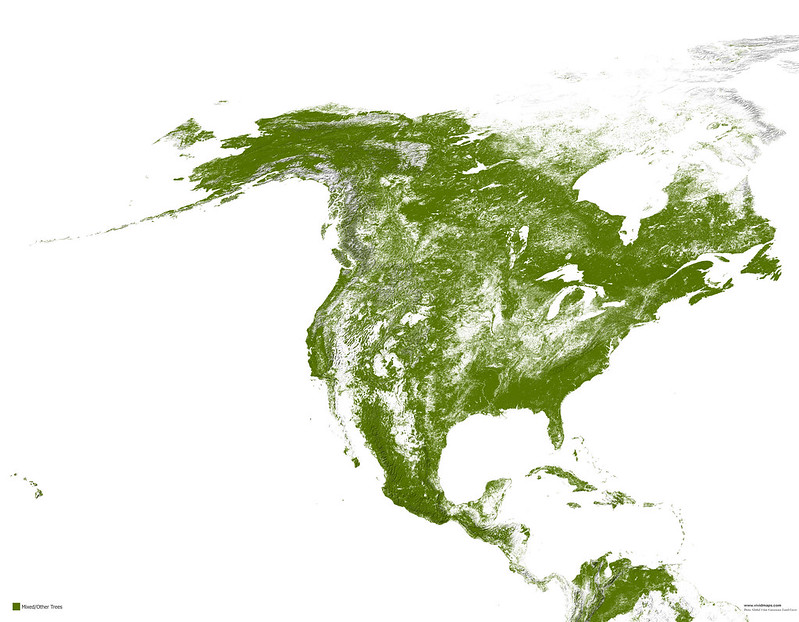 Mixed forests of North America of North America