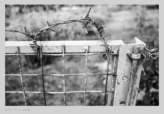 Stacheldraht-#-L1003533-#-Leica-X2---2020