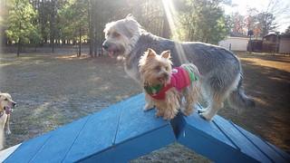 pet park Fayetteville, NC