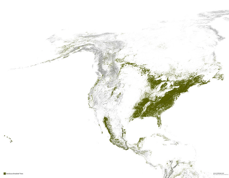 Map of deciduous broad-leaf forests of North America