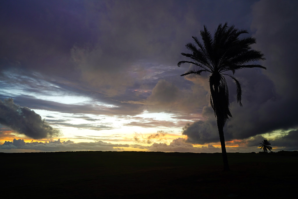 Picturesque silhouette of the palm tree at dawn, St Kitts