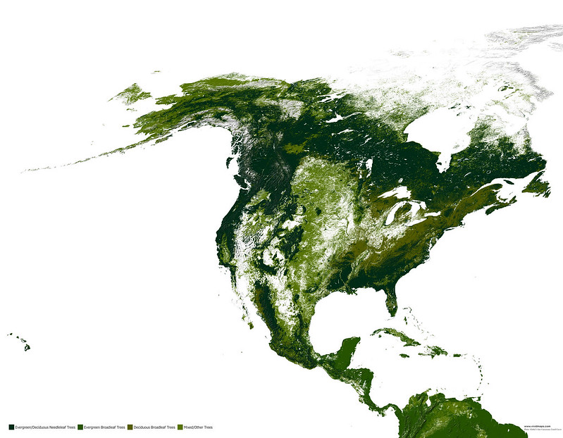 Forests of North America