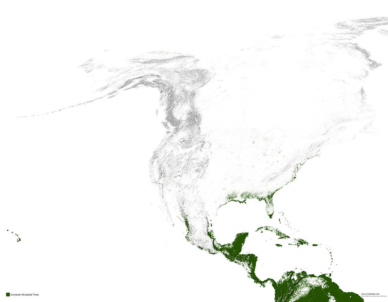 Map of Evergreen broadleaf forests of North America
