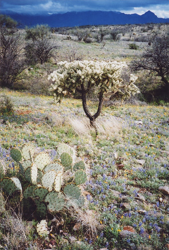 in a desert in Arizona, USA
