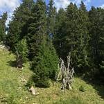 2020_08_12_Oberstockenalp (38)