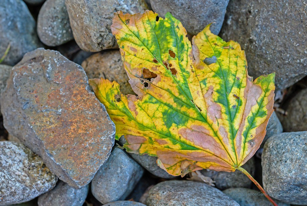 Leaf & stones