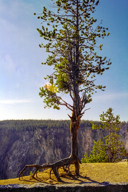 Yellowstone National Park-157