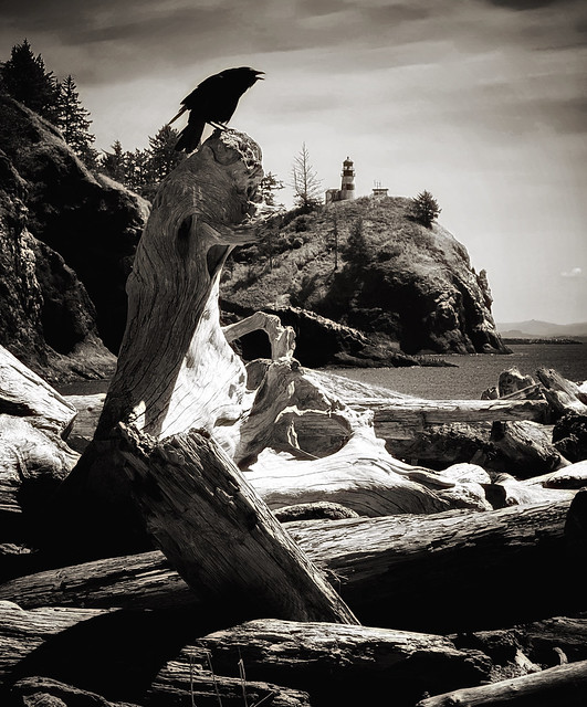 crow, cape disappointment