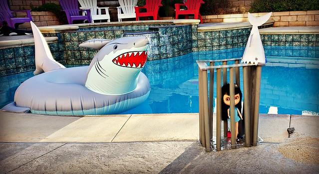 BaD Aug 14 - Shark