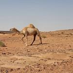 Landscape on the road from Sakaka to al-Ula (2)