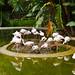 Flamingo' s party
