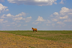 A very lonely horse
