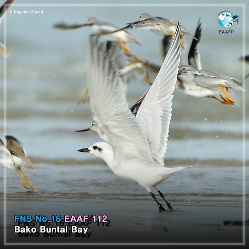 EAAF112 (Bako Buntal Bay) Card News