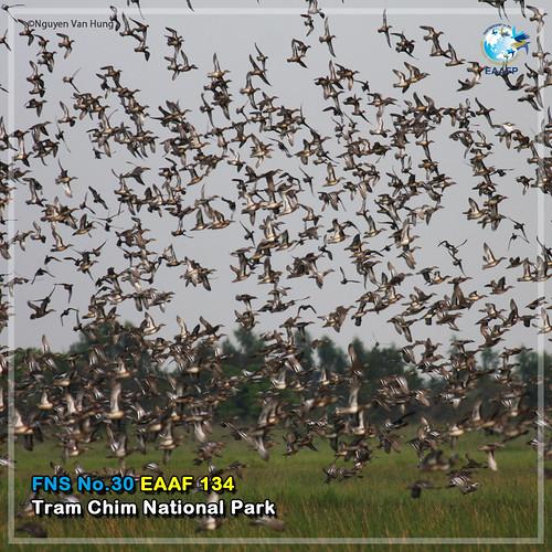 EAAF134 (Tram Chim National Park) Card News