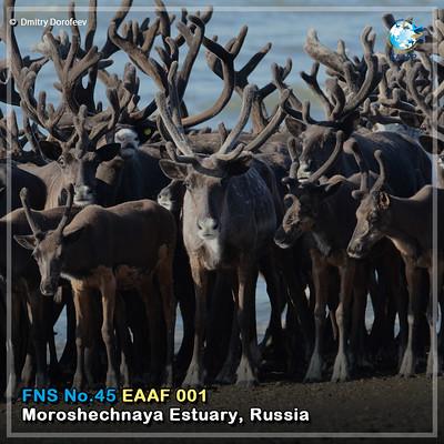 EAAF001 (Moroshechnaya Estuary) Card News