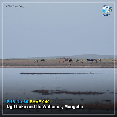 EAAF040 (Ugii Lake and Wetlands) Card News