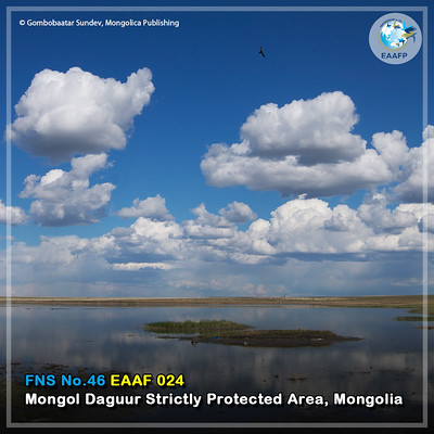 EAAF024 (Mongol Daggur Strictly Protected Area) Card News