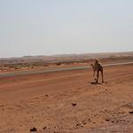 Landscape on the road from Sakaka to al-Ula (3)
