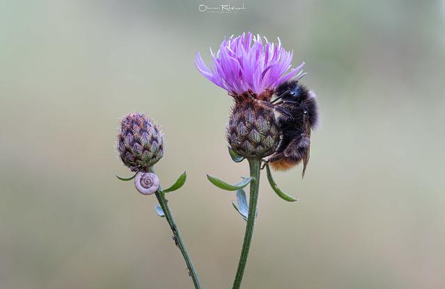 Biene mit Schnecke
