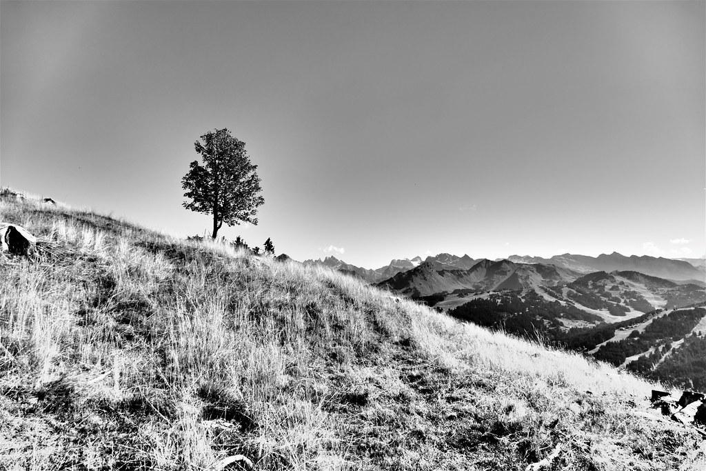 10.09.18. L'Arbre -  The Tree