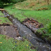 Dartmoor Diary Aug 2020 D7200-210.jpg