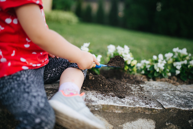 Toddler digging the soil with a small gardening shovel